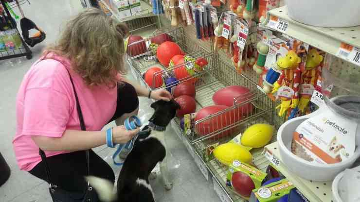 photo of a woman and a black and white dog shopping in a pet store