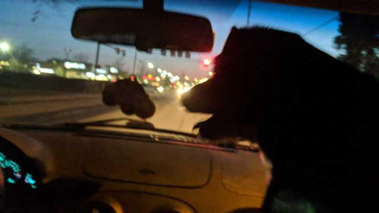 photo of owney dog