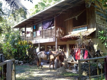 House front view. Mayus horse.