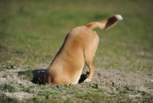 dog in a hole