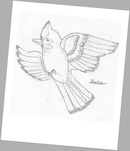 Galen's bird drawing