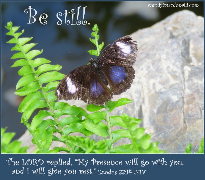Butterflies and Encouragement for Your Faith by Wendy L. Macdonald for greenlightlady.wordpress.com
