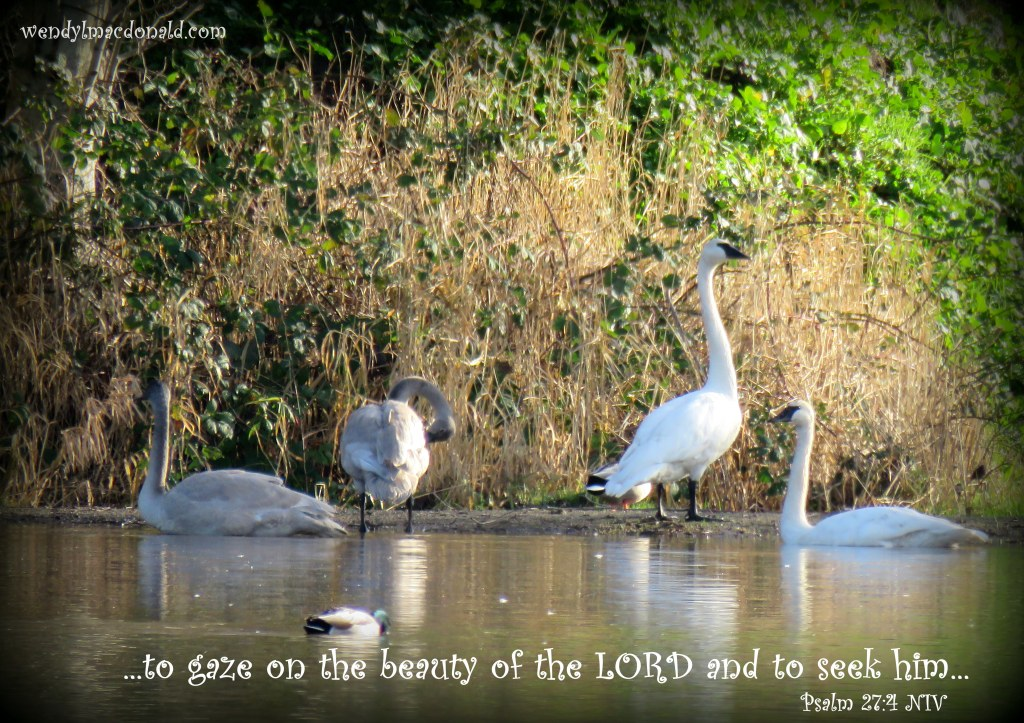 One thing I ask from the LORD, this only do I seek: that I may dwell in the house of the LORD all the days of my life, to gaze on the beauty of the LORD and to seek him in his temple. Psalm 27:4 NIV Focusing on Beauty #amwriting wendylmacdonald.com
