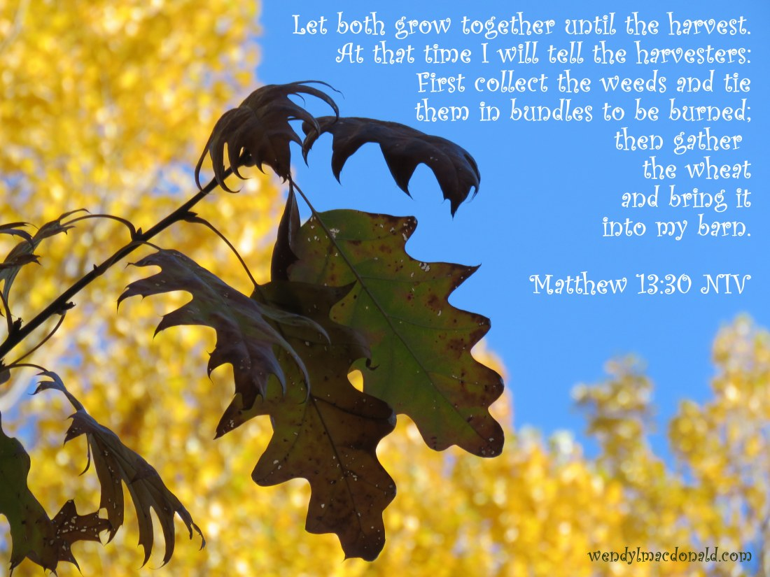 Let both grow together until the harvest. At that time I will tell the harvesters: First collect the weeds and tie them in bundles to be burned; then gather the wheat and bring it into my barn. Matthew 13:30 NIV