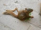 Baby Squirrel3