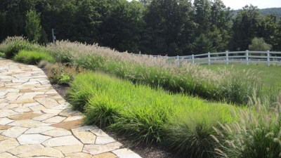 Lush grasses and other native plants
