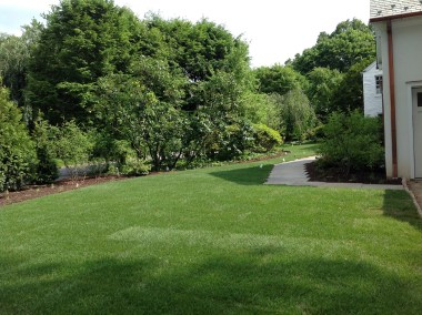 Lush green lawn and deciduous tree border as screen
