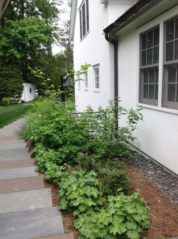 Bluestone walkway with native perennial flowers