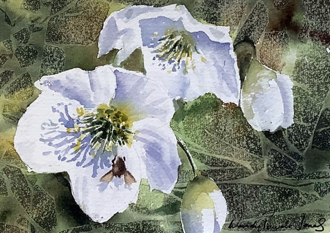 Christmas Rose with Bee