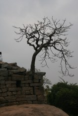 day-17-img_5753-tree
