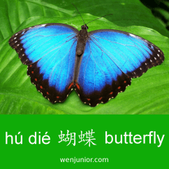 butterfly flashcard
