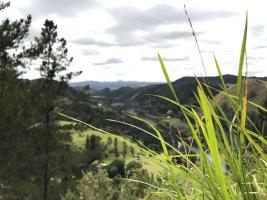 Blick über Neuseelands Hügellandschaft