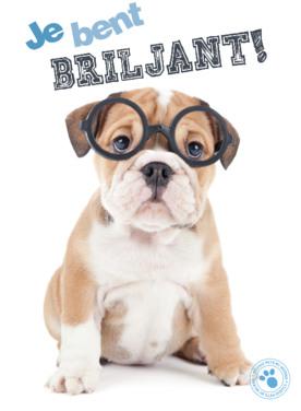 Dierenkaart hond