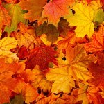 autumn01