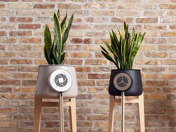How Best Clairy Plant-Powered Air Purifiers Cleans Air