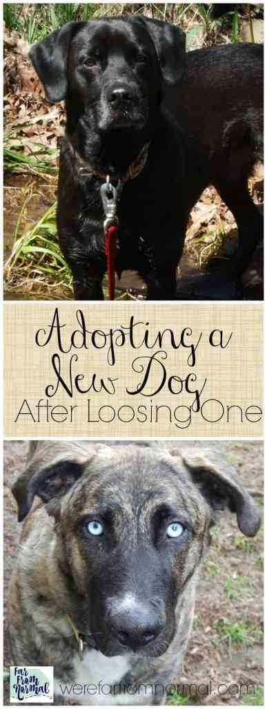 adopting-a-new-dog-after-loosing-one