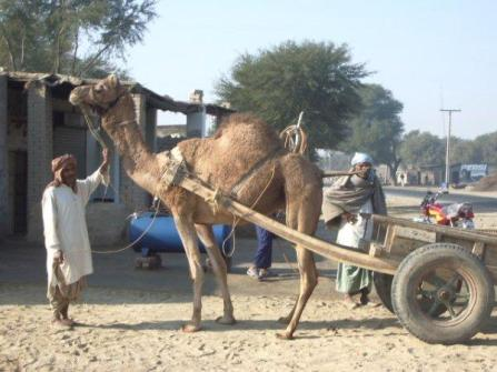 pakistan06