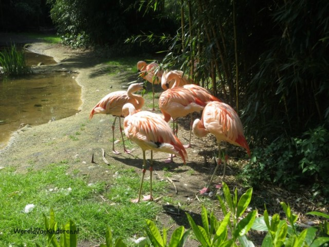 Expeditie Zooparc (4)