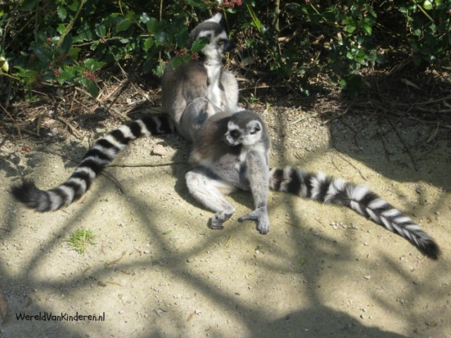 Expeditie Zooparc (5)