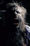 """Watch short film """"Bad Moon Rising"""", or """"why you don't keep werewolves in captivity"""" featured image"""