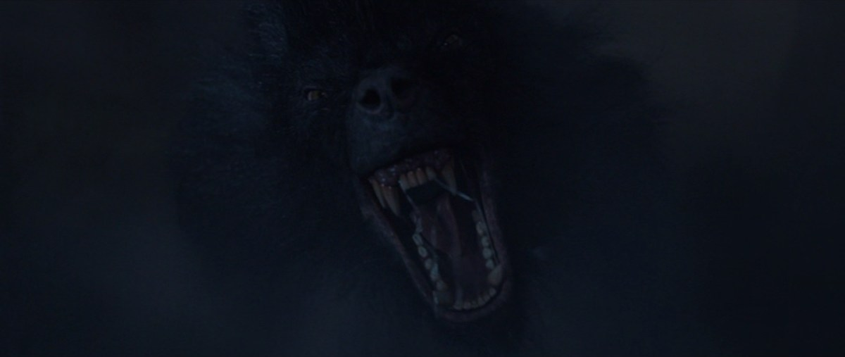 Full Moon Features: 2019's Secret Wide-Release Werewolf Movie featured image