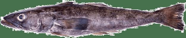 Chile - Bacalao de Profundidad: el alimento marino de lujo a punto de ser privatizado