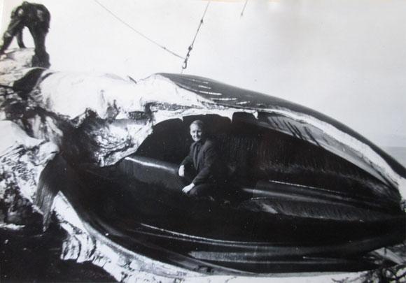 Jan Beiboer in de bek van een blauwe vinvis aan boord van de Willem Barendsz.