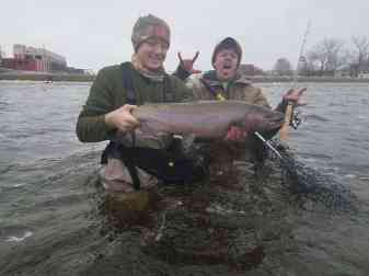 Grand River Steelhead