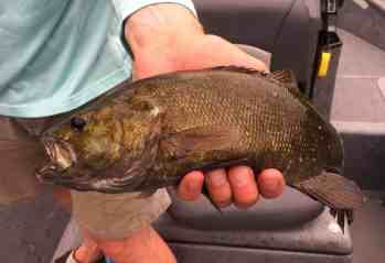 Grand River Smallmouth