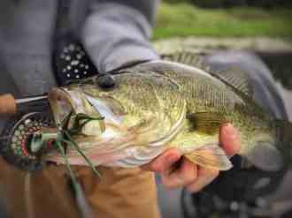 Man holding a largemouth bass with a fly in its mouth