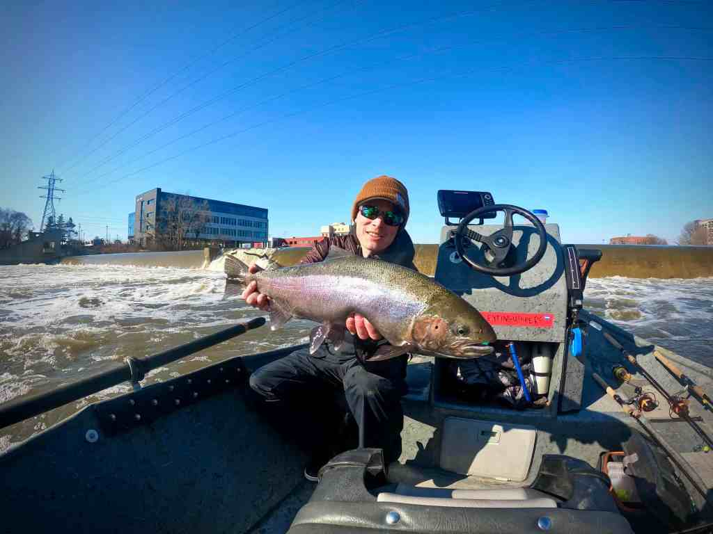 Grand River Steelhead caught in downtown Grand Rapids