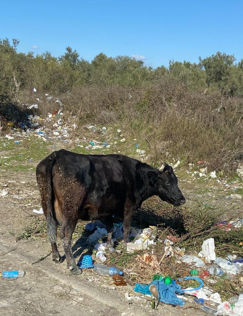 Die Kehrseite Albaniens