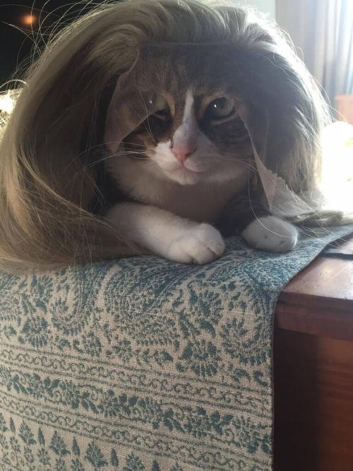 Add Ariel's cat to the list of queens prettier than Chiffon