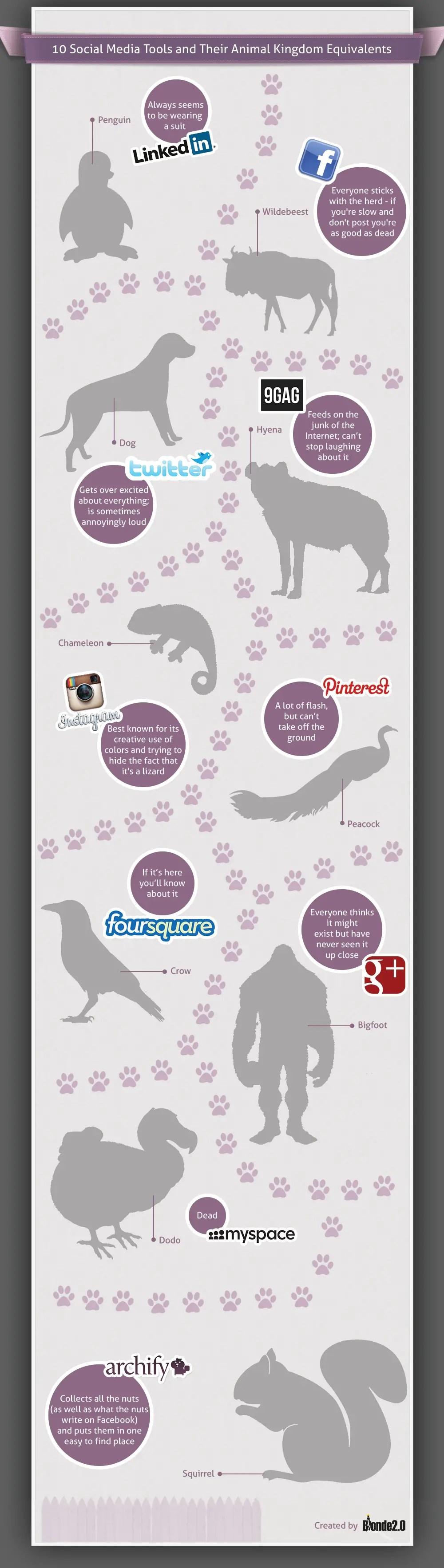Social-Media-Animals