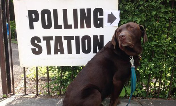 Dogs_at_Polling_Stations