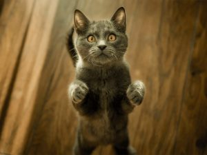 wersm-have-you-seen-my-cat