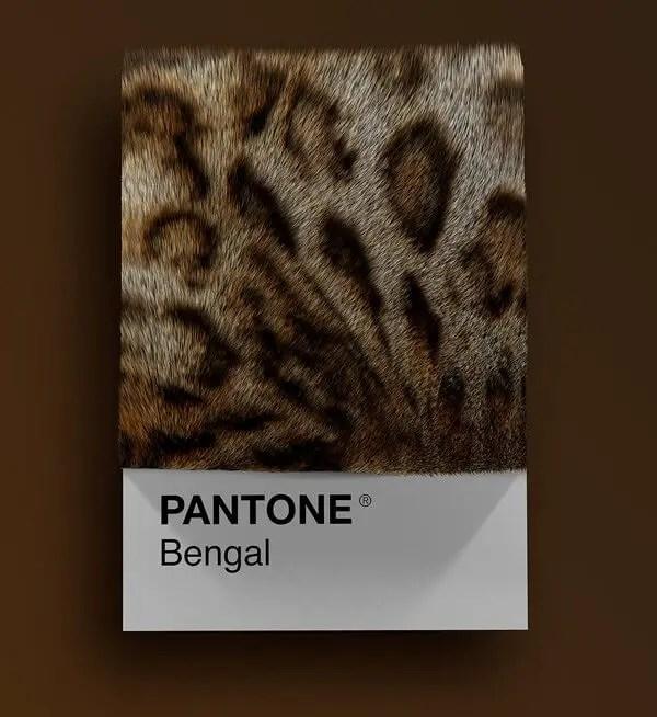 wersm-CAT-BREEDS-AS-PANTONE