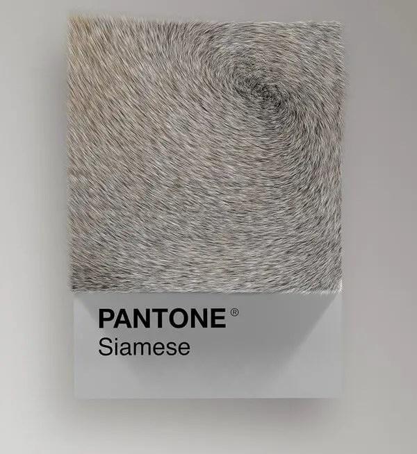 wersm-CAT-BREEDS-AS-PANTONE30