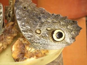 Ecuador 2010 081
