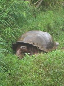 Ecuador 2010 220