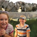 St. Louis Zoo – Lions, Tigers, & Bears!