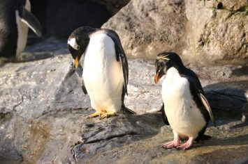 St Louis Zoo-2990