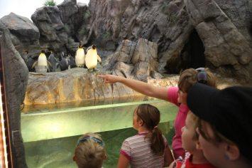 St Louis Zoo-2993