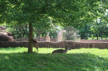 St Louis Zoo-3025