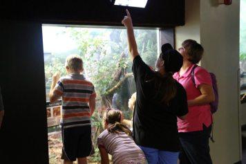 St Louis Zoo-3066