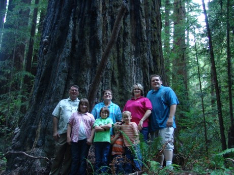 Redwoods--2
