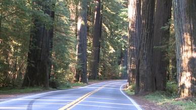 Redwoods-2011-2