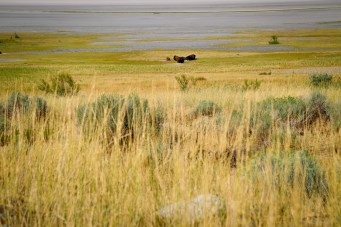 Antelope Island-0557