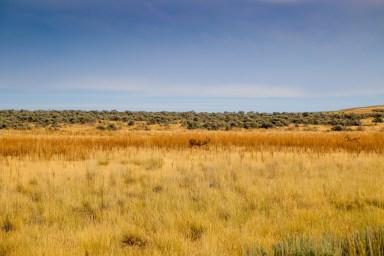 Antelope Island-0577