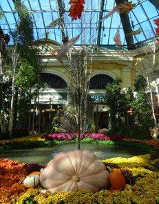 Bellagio Conservatory-05369